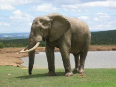 elephant24.jpg